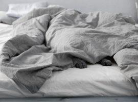 Warum Katze, Hund und Stöckelschuh mit ins Wasserbett dürfen.